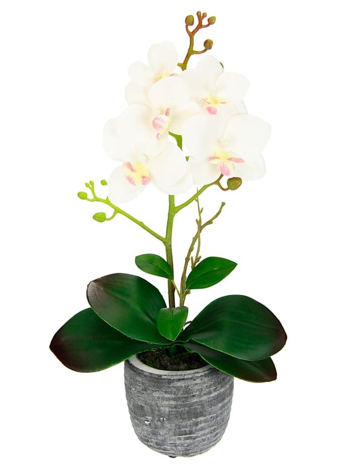 IGEA Orchidee in pot, Crème