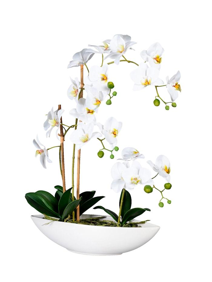 Orchidee in Schiffchenvase