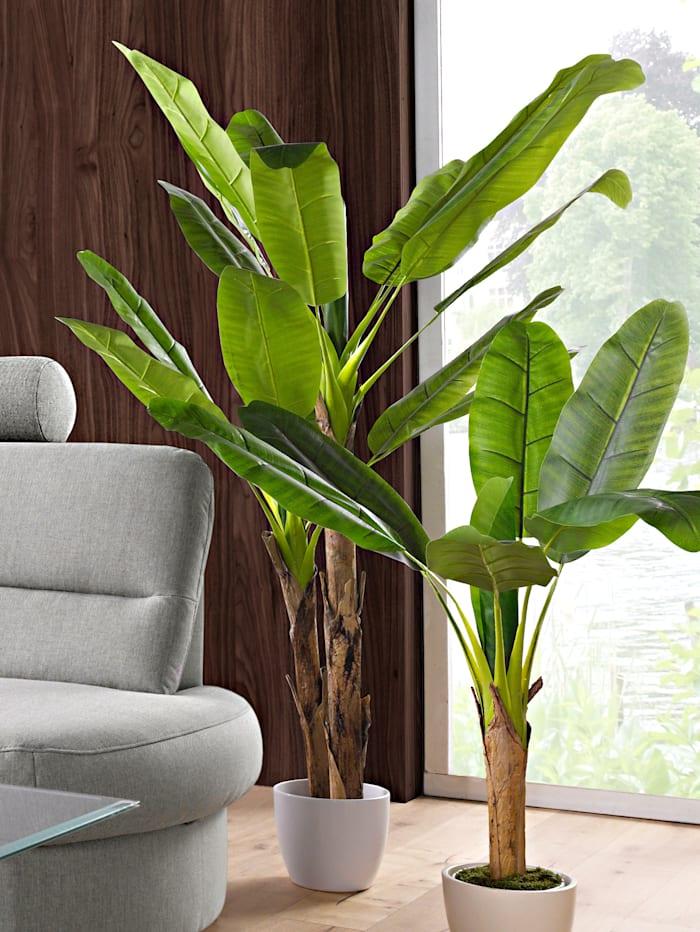Globen Lighting Bananenplant, Groen