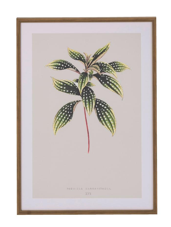 IMPRESSIONEN living Bild, Pflanze, grau/grün/braun