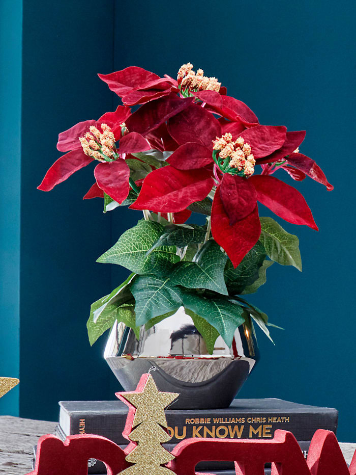 Poinsettie