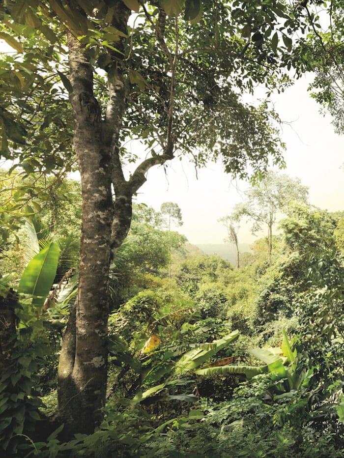 Komar Fototapete 'Dschungel', Grün