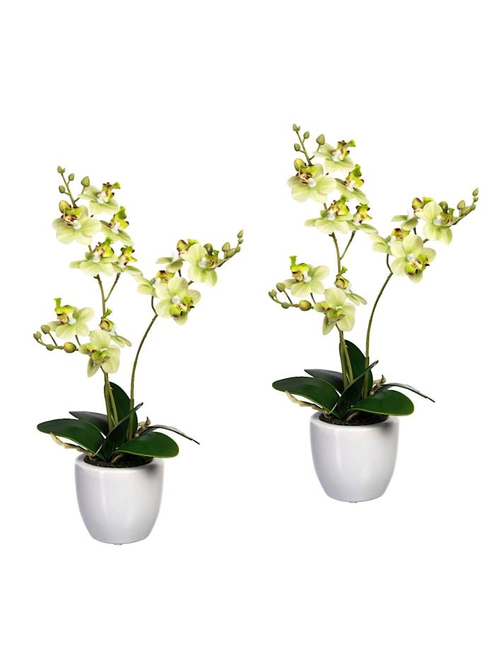 Globen Lighting 2er Set Mini-Orchidee, Grün