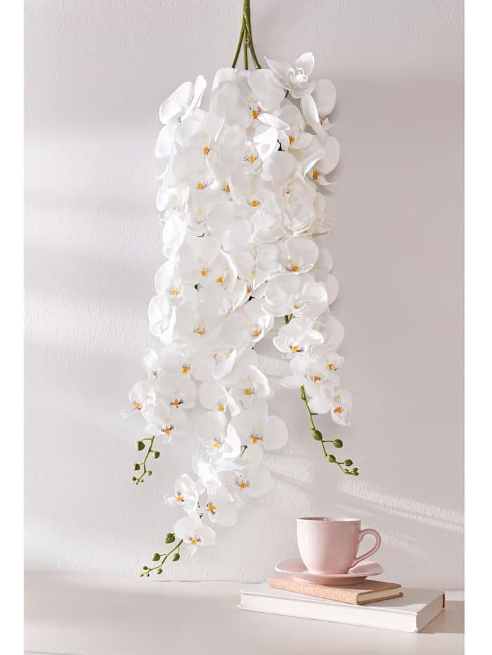 Orchideeëntak