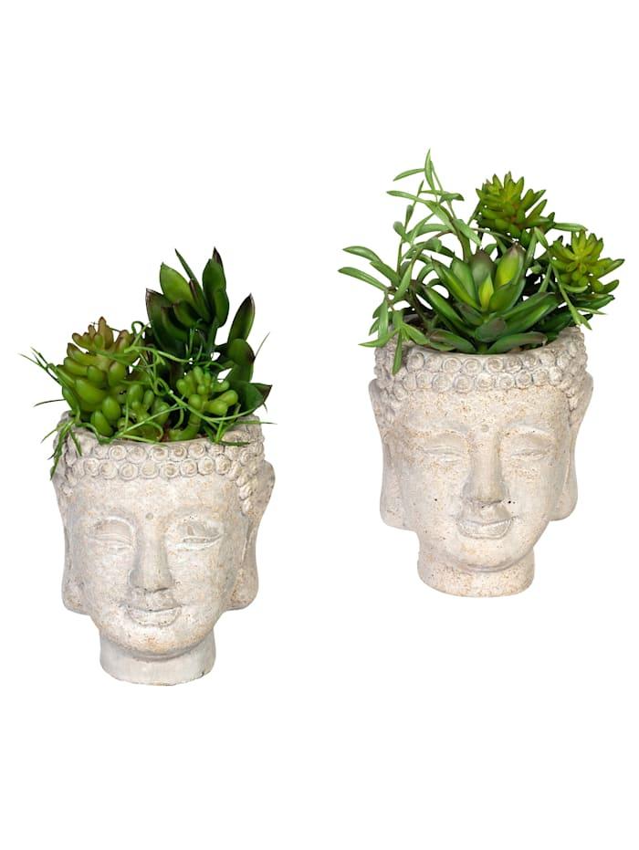 Globen Lighting Set van 2 vetplantjes in pot, Groen