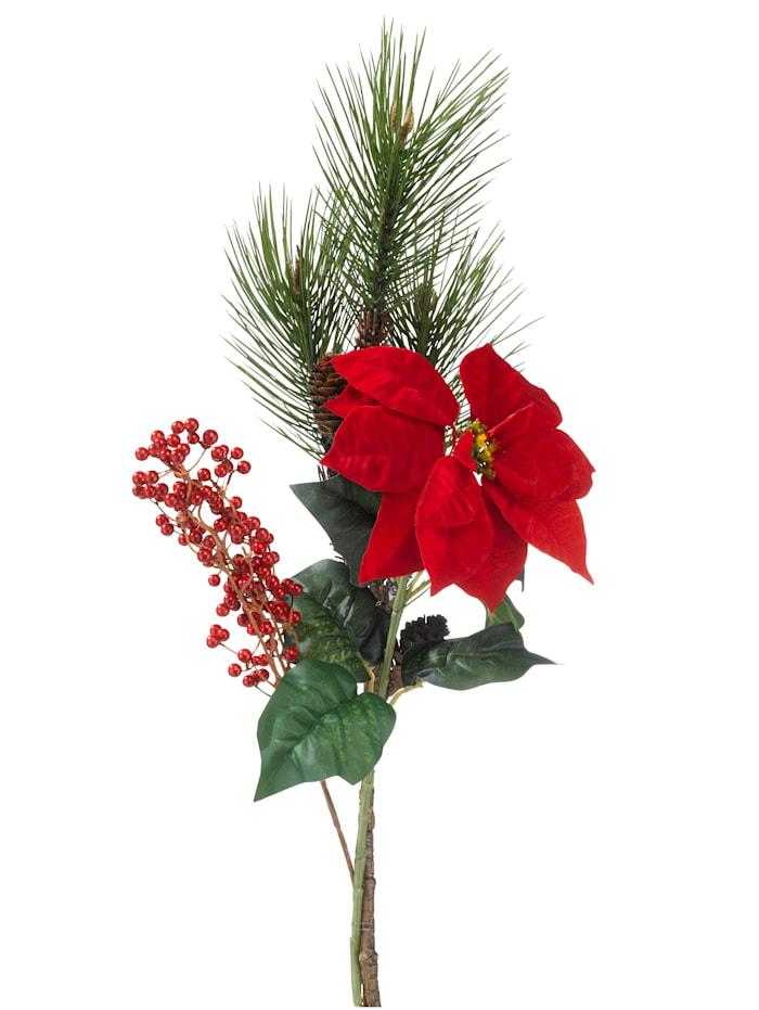 Arrangement Weihnachtsstern