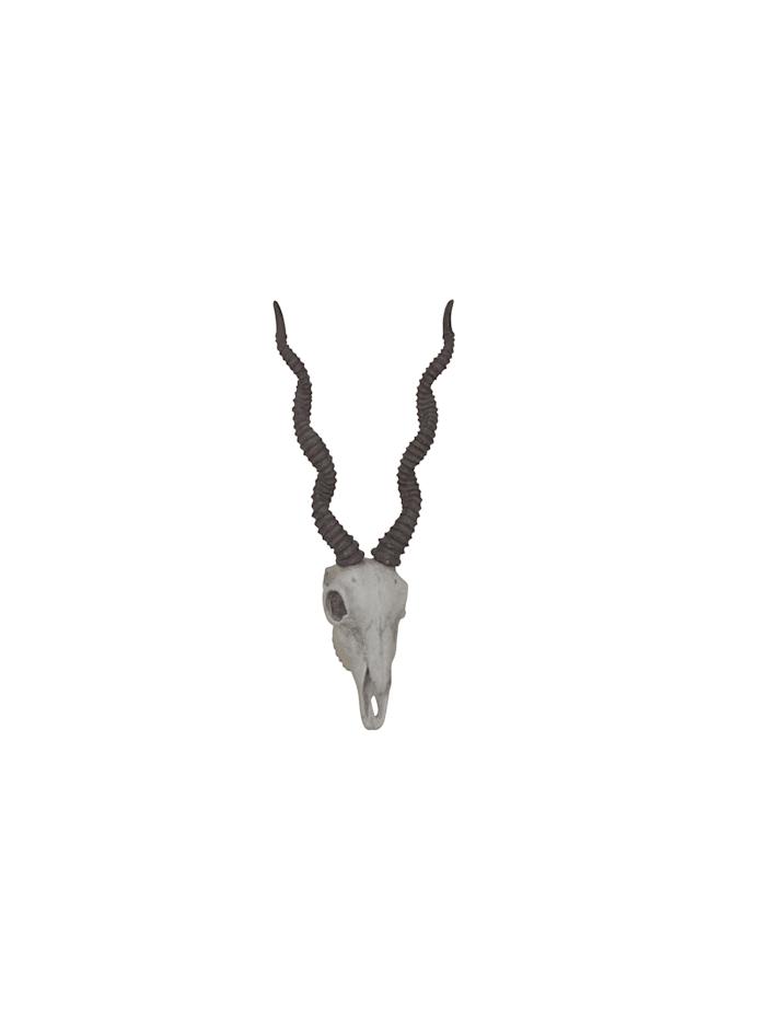 """Möbel-Direkt-Online Deko """"Antilopenschädel"""", naturfarben"""