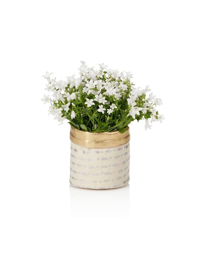 IMPRESSIONEN living Blumentopfbezug, creme silber
