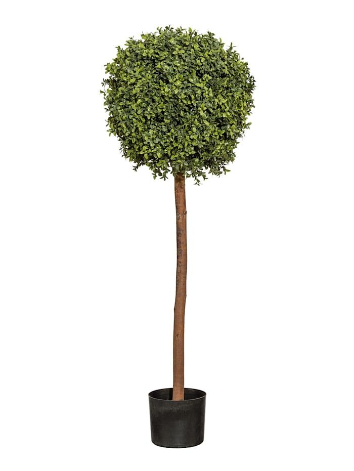 Globen Lighting Buchskugelbaum, Grün