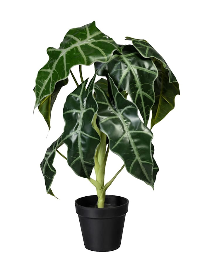 Globen Lighting Alocasia in pot, Groen