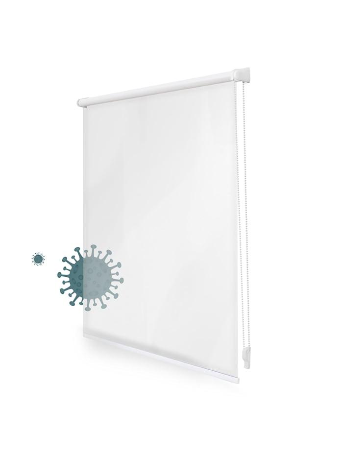 Lichtblick Sonnenschutzsysteme Rollo Hygiene Rollo, Transparent, Transparent