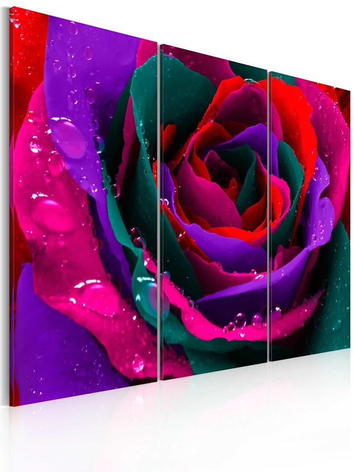 artgeist Wandbild Regenbogenfarbene Rose, mehrfarbig