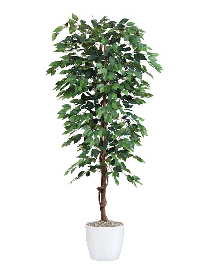 Globen Lighting Ficus Benjamina, Groen