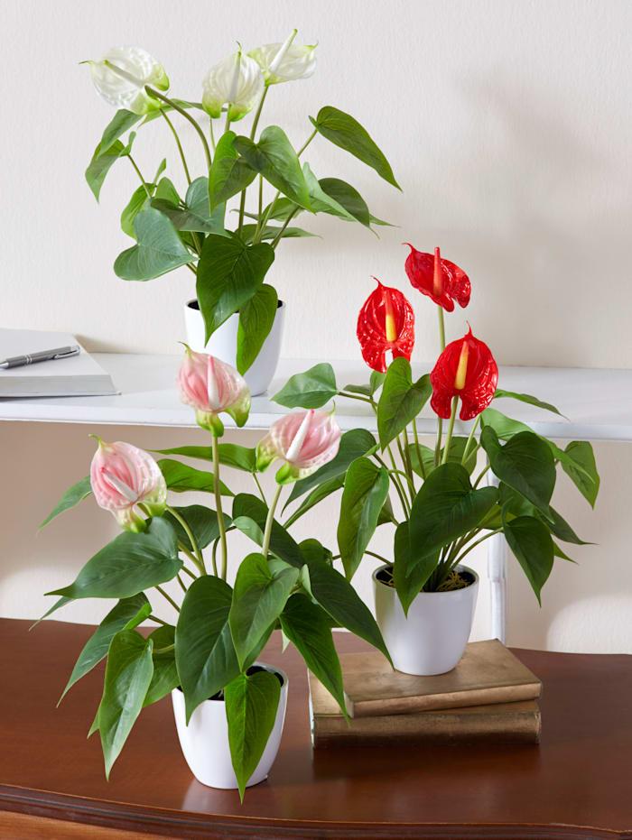 Gasper Anthurium artificiel, Rose