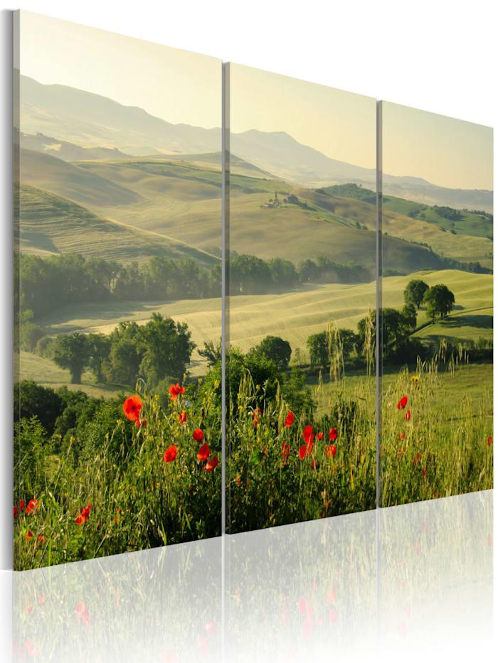 artgeist Wandbild Mohnblumen auf toskanischen Hügeln, green,grey