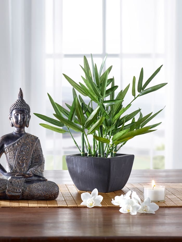 Bambou décoratif, Vert