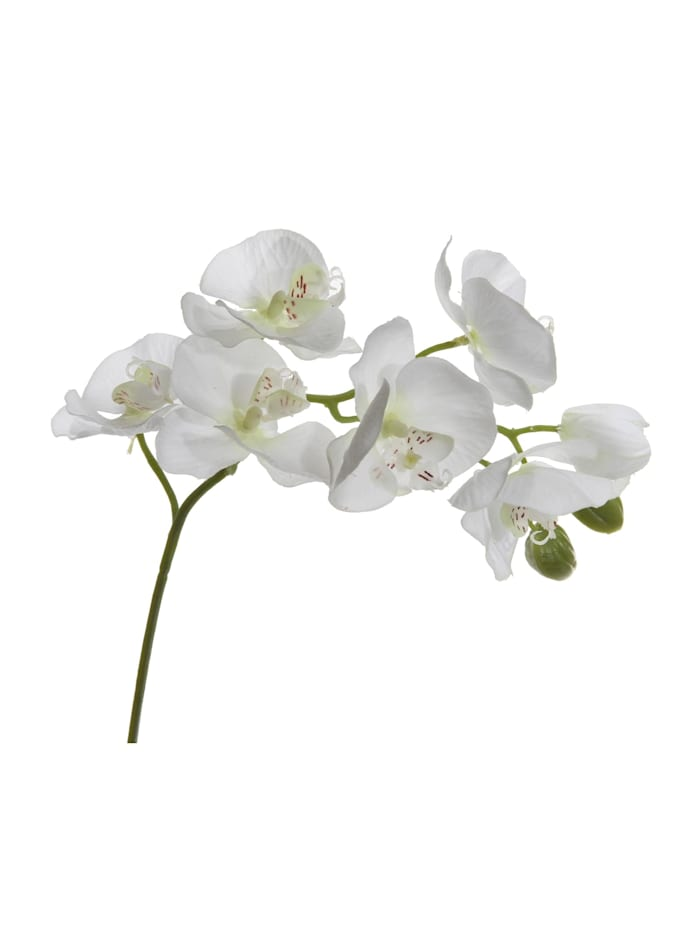 HTI-Living Orchideenzweig Kunst 9 Blüten, Weiß, Grün