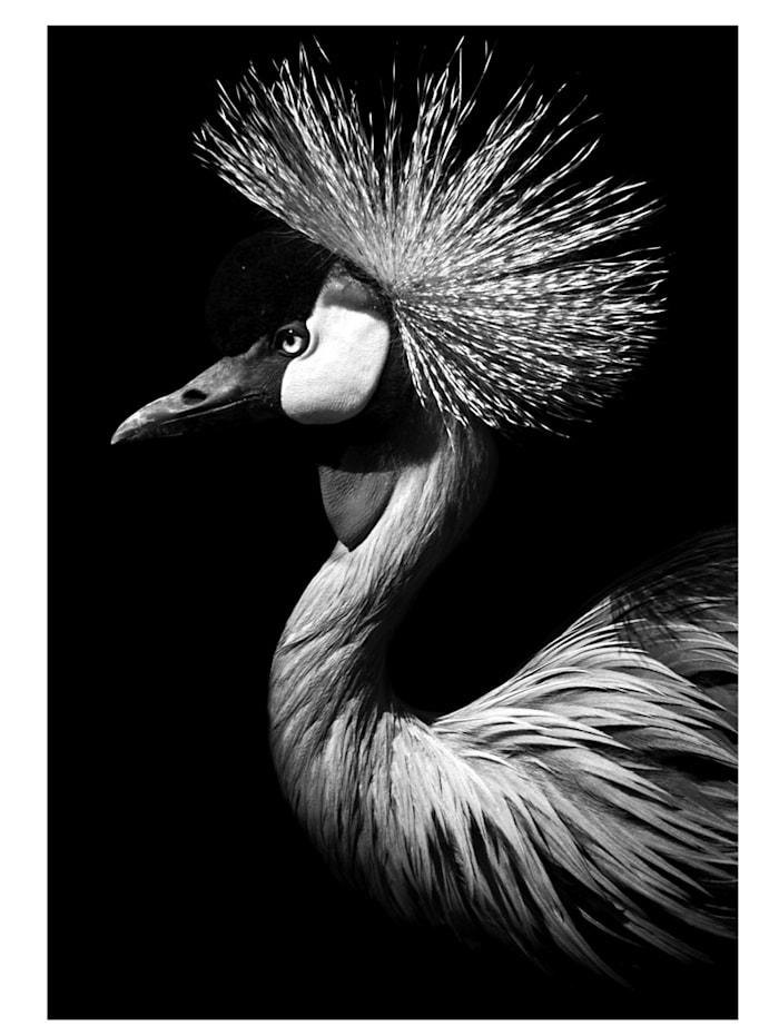 mySPOTTI Bild, Vogel, Schwarz/Weiß