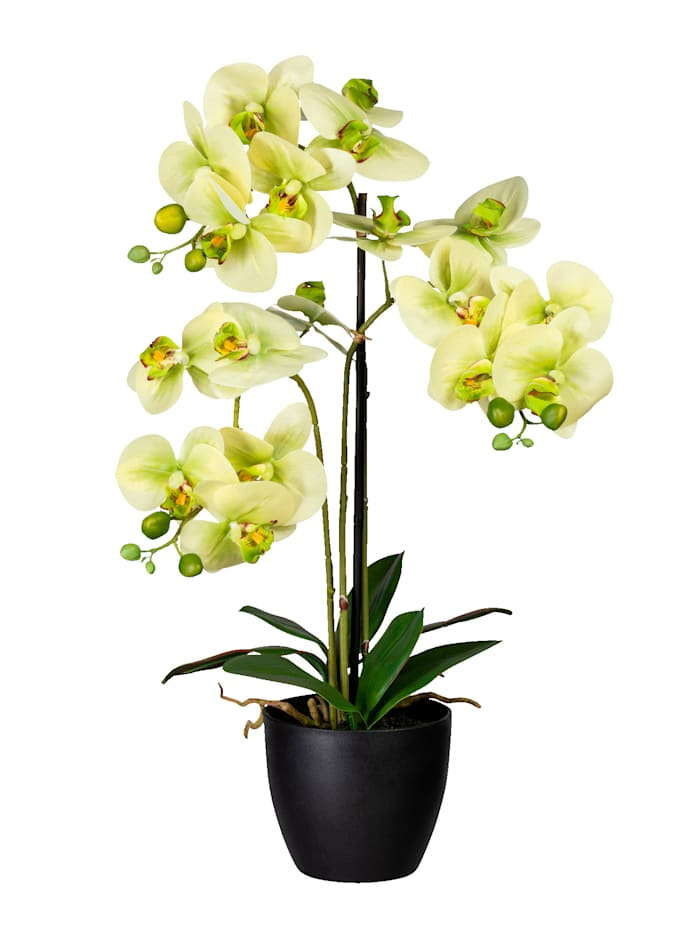 Globen Lighting Orchidee in schwarzem Topf, Grün