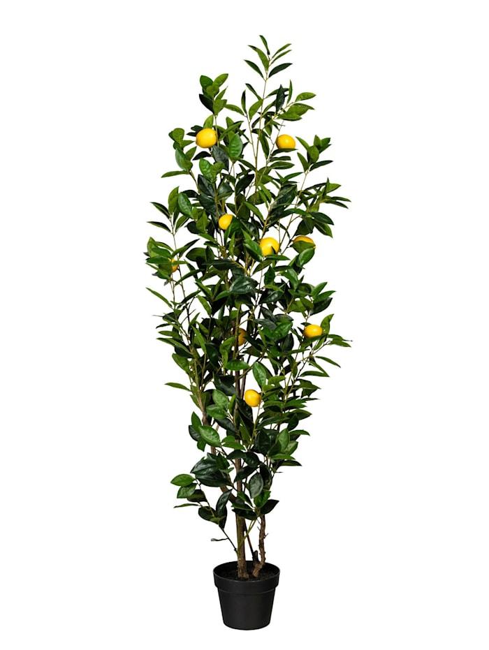 Globen Lighting Citronträd, Grön