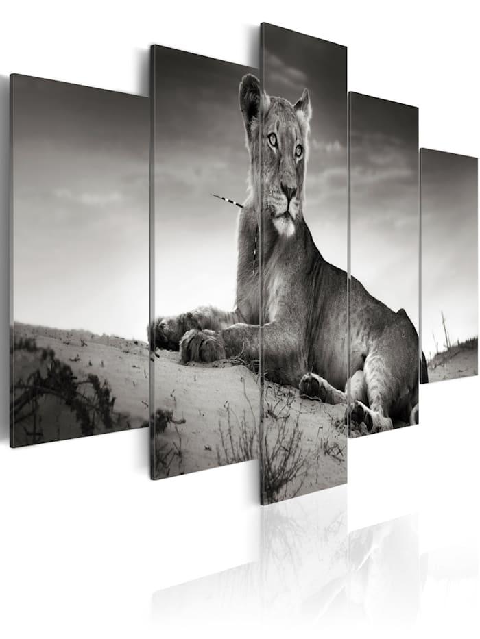 artgeist Wandbild Löwin in der Wüste, schwarz-weiß