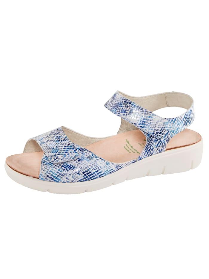 Solidus Sandaaltje, Blauw
