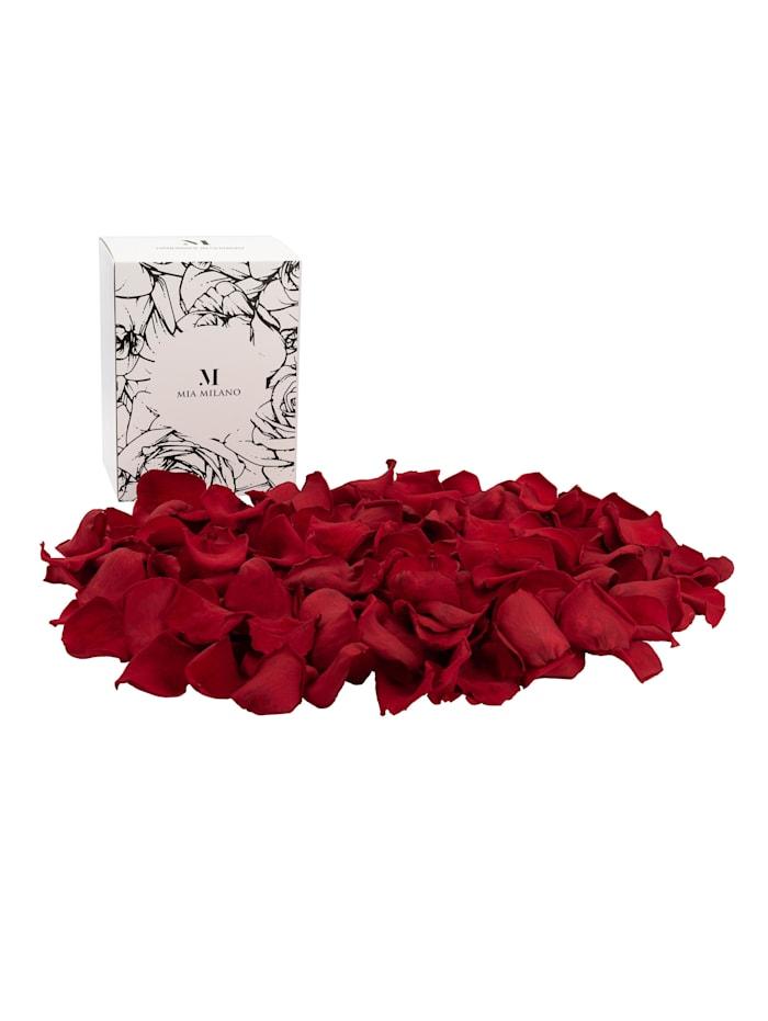 Mia Milano Rosenblätter Rosenblüten, rot