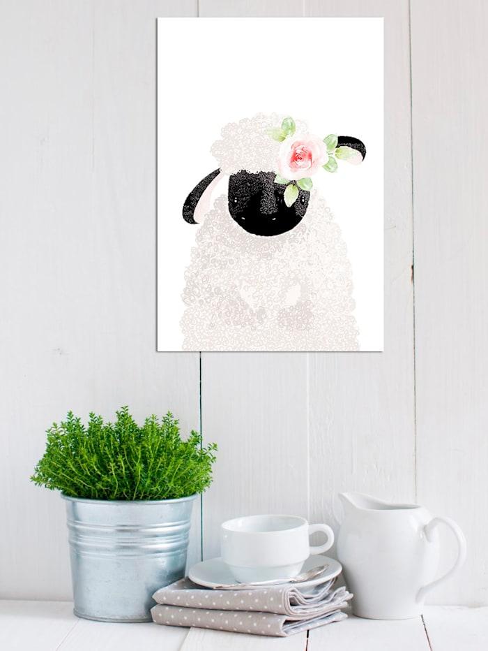 Schild, Schaf