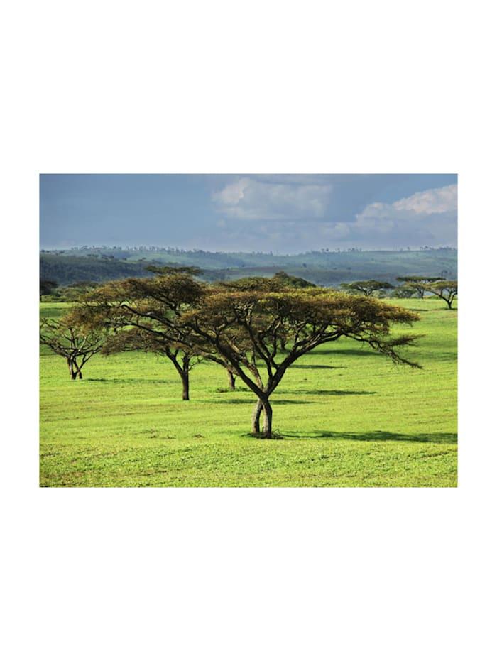 Fototapete Afrikanische Bäume