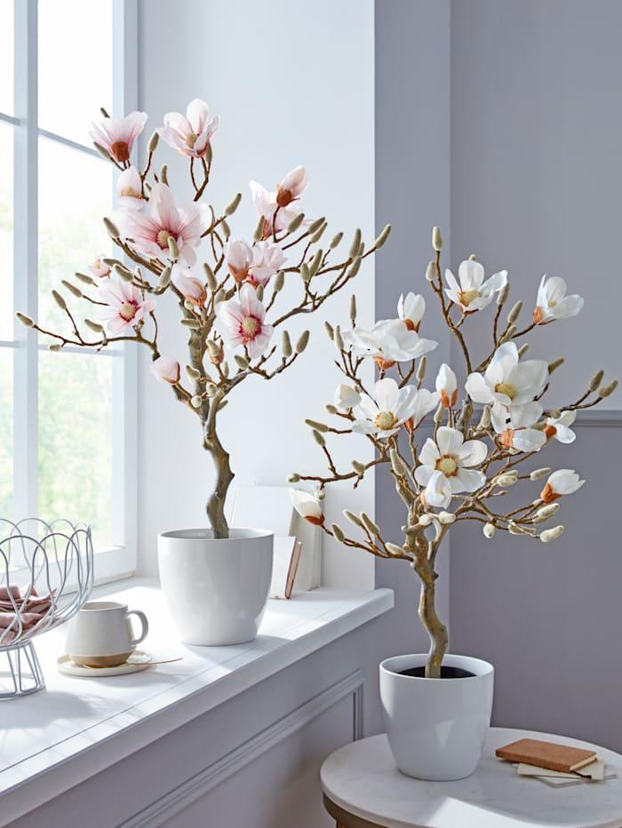 Magnolienbaum, Weiß/Schwarz