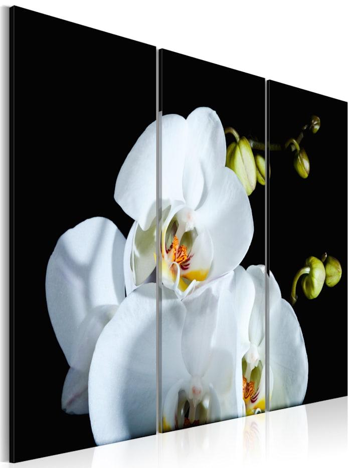 artgeist Wandbild Schneeweiße Orchidee, Schwarz,Grün,Weiß