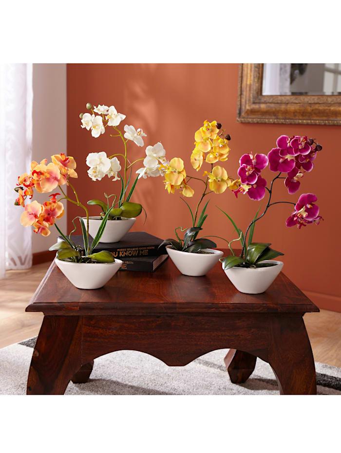 Orkidé, Hvit