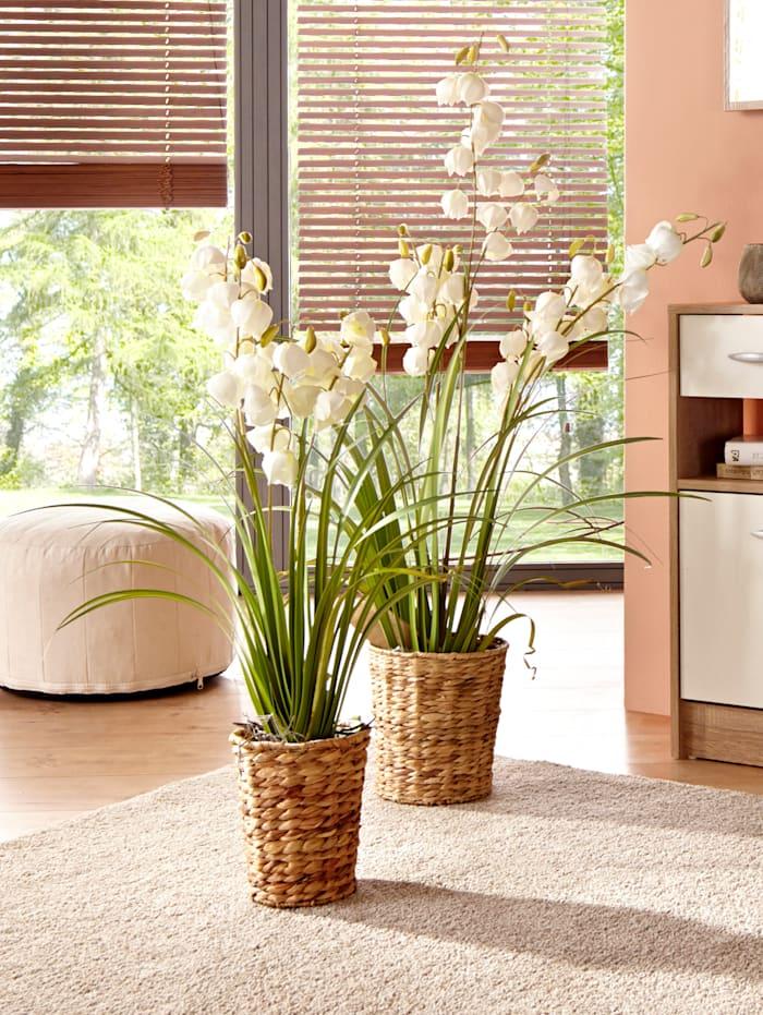 Yuccaplant met bloemen