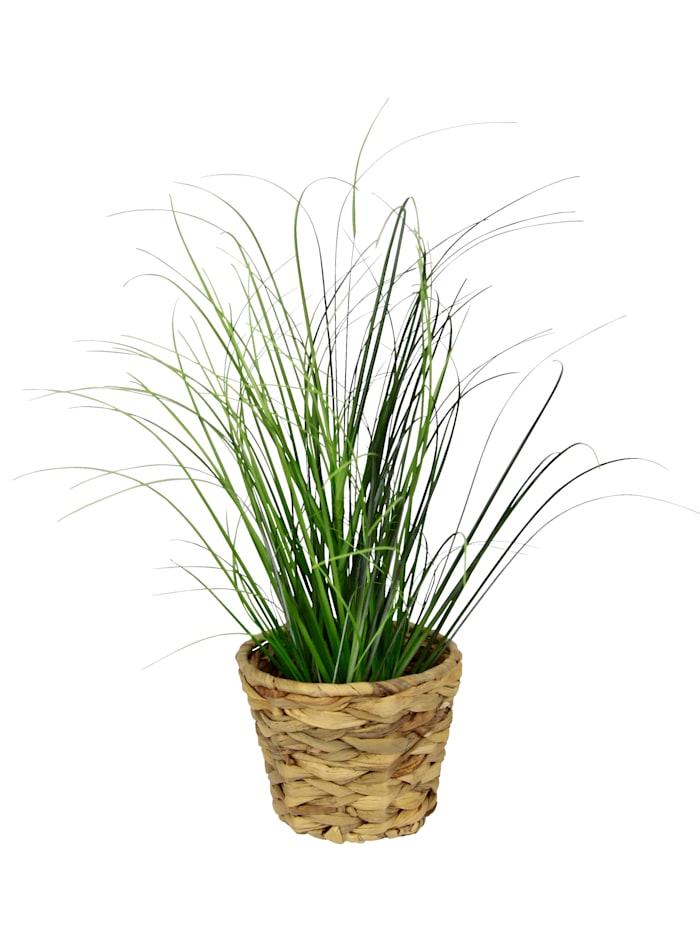 Gras im Topf, grün