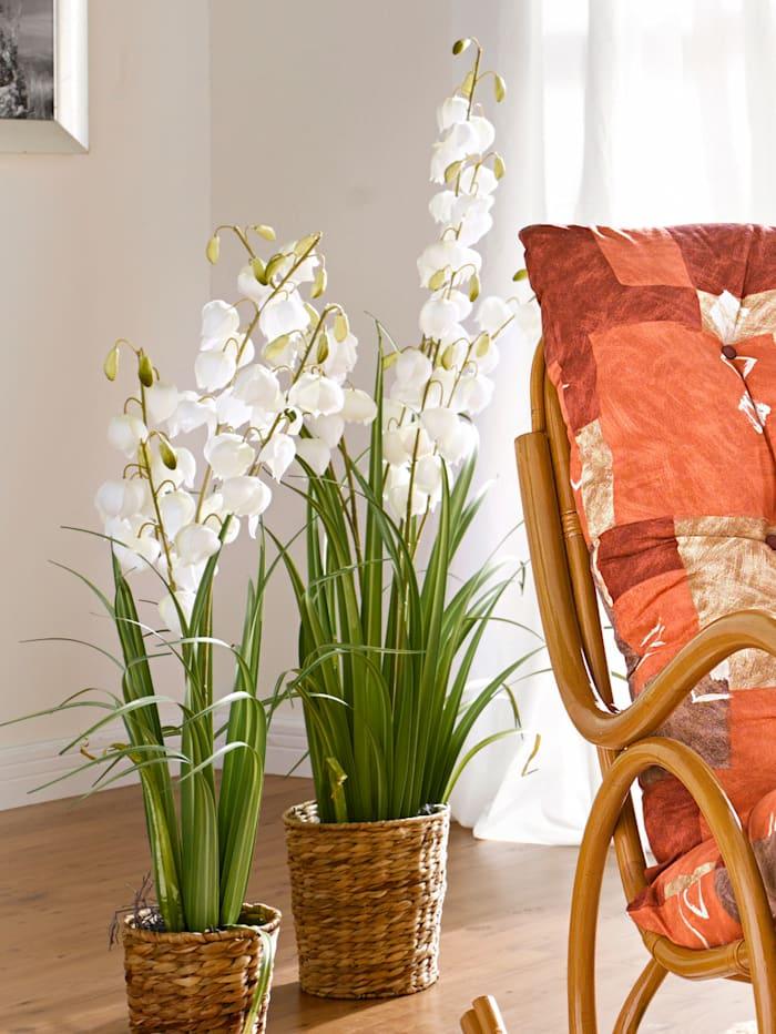 Yucca en fleur, blanc