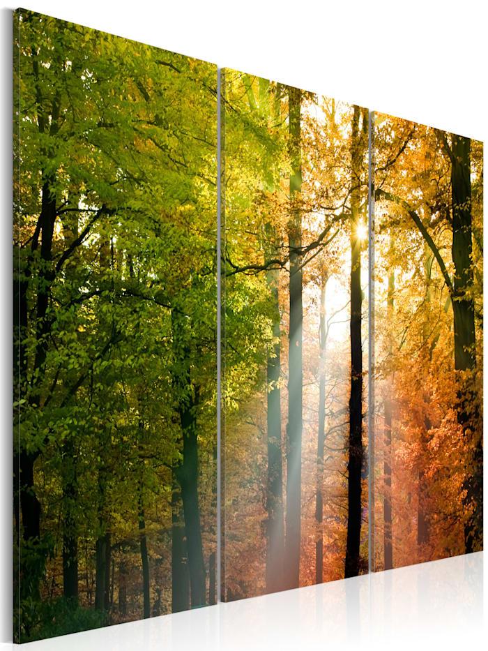 artgeist Wandbild Freundlicher Herbstwald, Grün,Orange,Schwarz,Braun,Weiß
