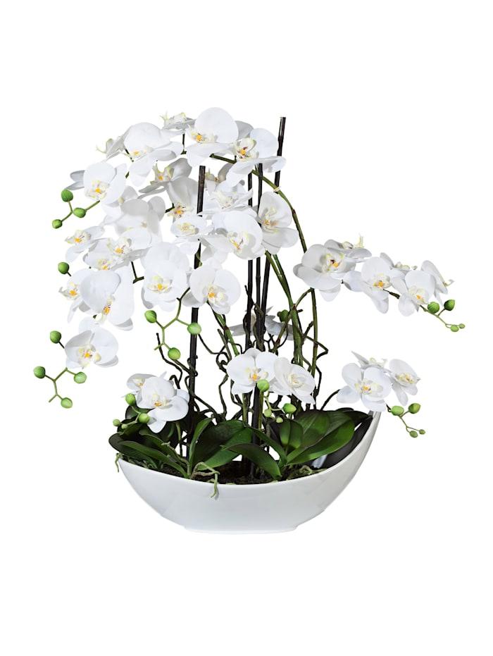 Globen Lighting Orchideenarrangement, weiß