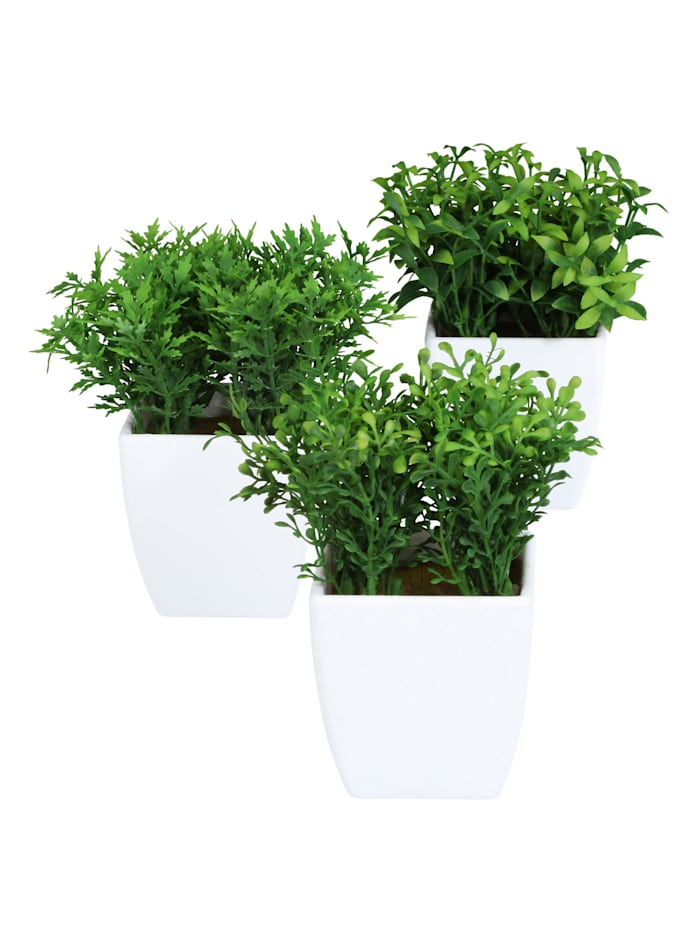 3-teiliges Set Mini-Gras
