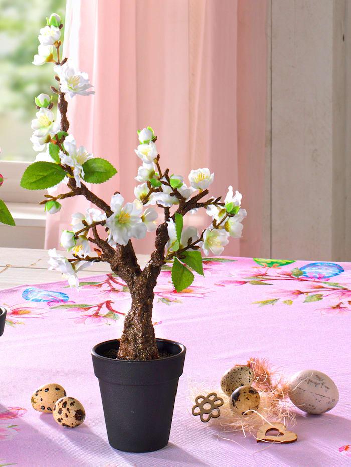 Kersenbloesemboompje