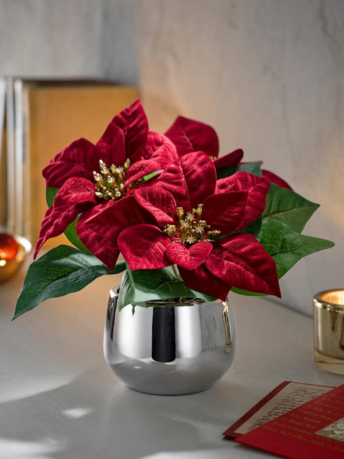 Globen Lighting Vianočná hviezda v kvetináči, Červená