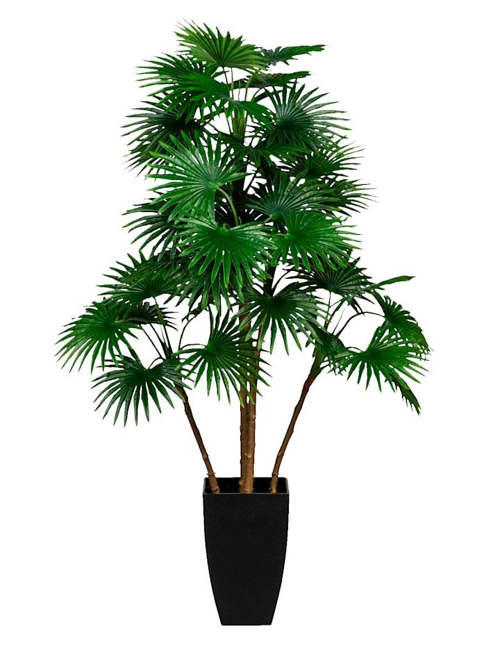 Globen Lighting Konstgjord växt, fläktpalm, Grön