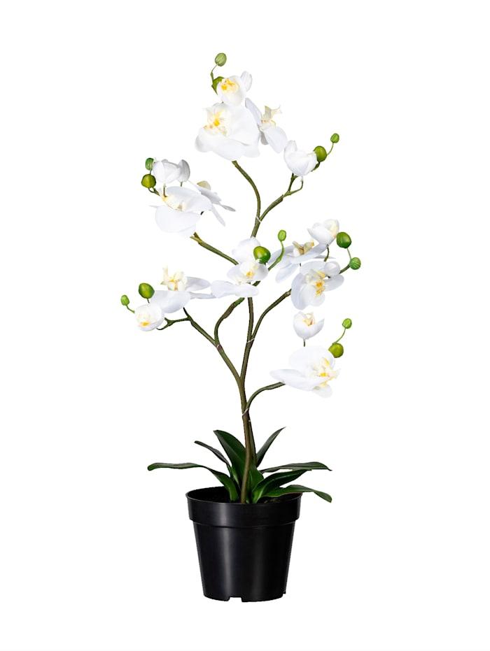 Globen Lighting Orchidee mit Knospen, Weiß