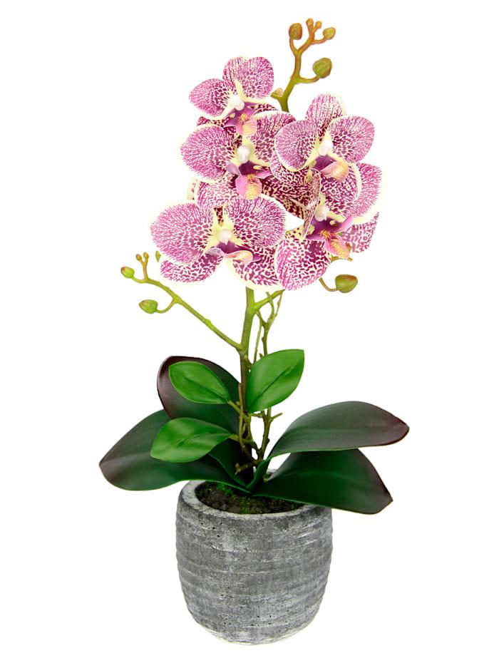 IGEA Orchidee im Topf, fuchsia, Fuchsia