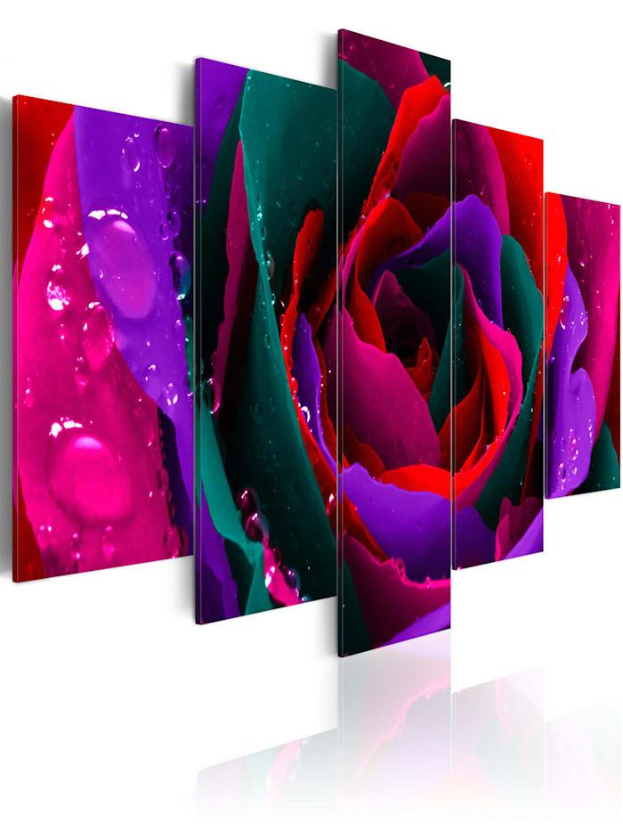 artgeist Wandbild Multicoloured rose, mehrfarbig