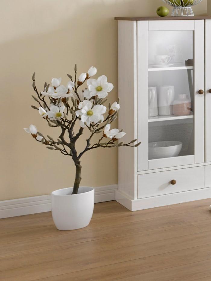 Konstgjord växt, magnolia i kruka