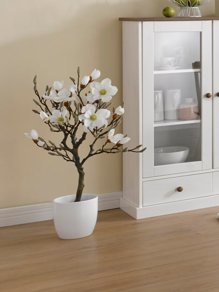 Globen Lighting Konstgjord växt, magnolia i kruka, Vit