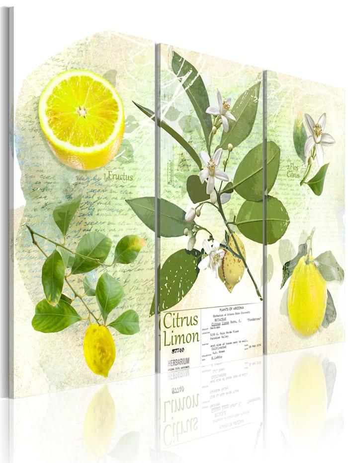 artgeist Wandbild Fruit: lemon, Beige,Grün,Weiß,Gelb