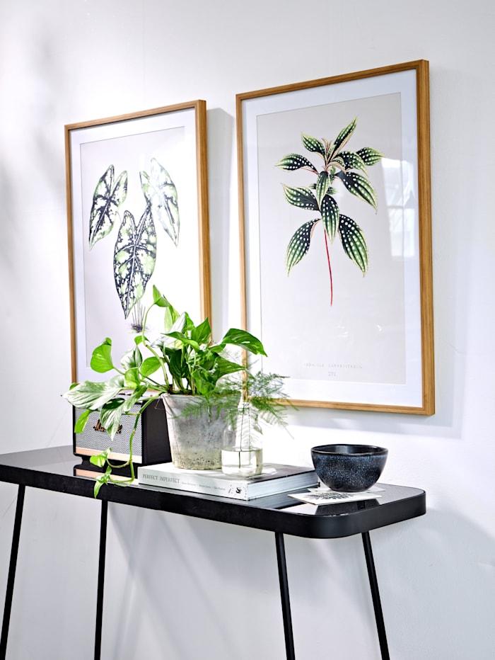 Bild, Pflanze
