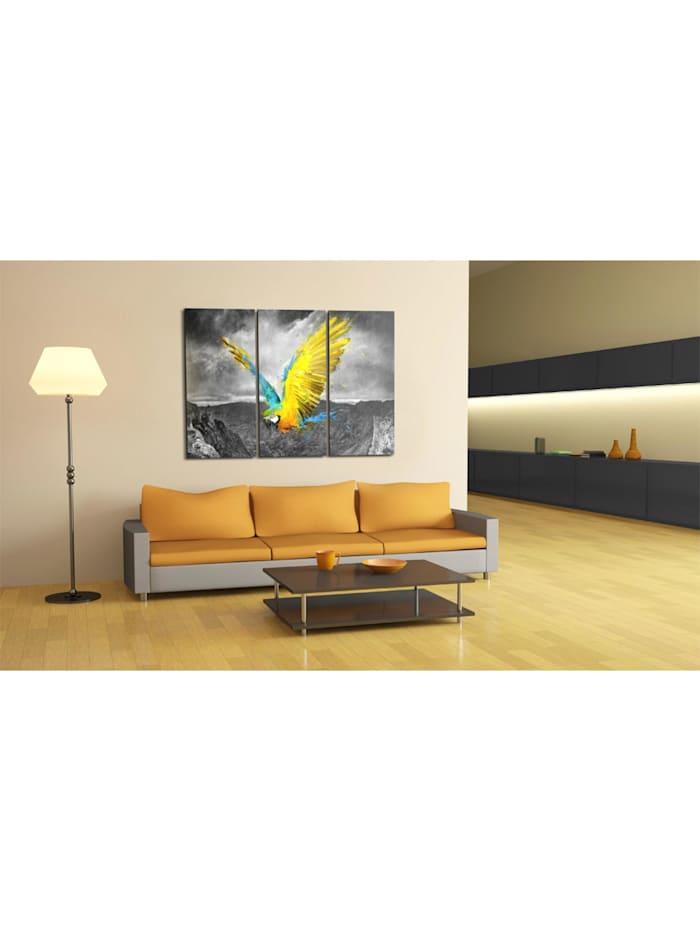 Wandbild Paradiesvogel - Triptychon