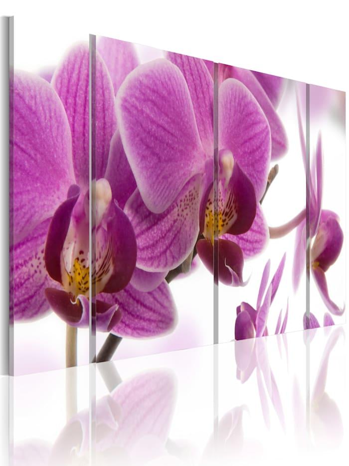 artgeist Wandbild Marvelous orchid, Violett,Weiß
